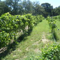 Graham Creeks Wine and Vine gallery photo