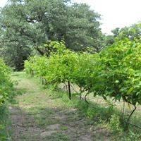 Graham Creeks Wine and Vine profile photo
