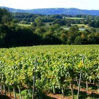 Stopham Vineyard  profile photo
