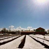 Vignoble de l'Orpailleur profile photo
