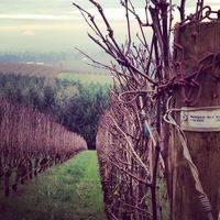 Archery Summit Winery profile photo