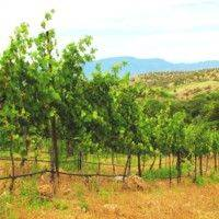 Javelina Leap Vineyard & Winery gallery photo