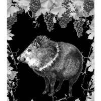 Javelina Leap Vineyard & Winery profile photo
