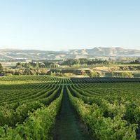Greystone Wines profile photo