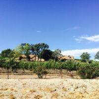 Pelletiere Estate Vineyard and Winery profile photo