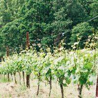 Keeler Estate Vineyard profile photo