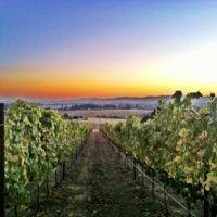 Keeler Estate Vineyard gallery photo