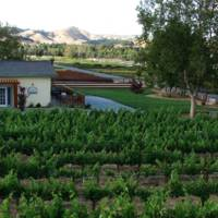Sarah's Vineyard gallery photo