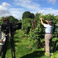 Rothley Wine Estate, Kingfishers' Pool Vineyard (wines sold by Rothley Wine Ltd) gallery photo