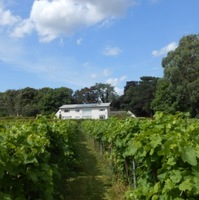 Rothley Wine Estate, Kingfishers' Pool Vineyard (wines sold by Rothley Wine Ltd) profile photo