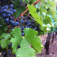 Kingman Estates Winery profile photo