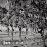 Harvest Estate gallery photo
