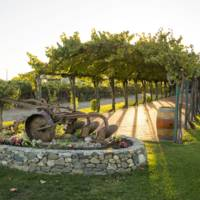 Concannon Vineyard gallery photo