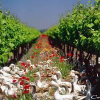 Cono Sur Vineyards & Winery gallery photo