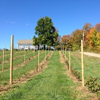 Annapolis Highland Vineyards profile photo