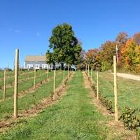 Annapolis Highland Vineyards profile photo