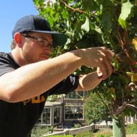 Castillo's Hillside Shire Winery profile photo
