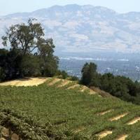 Cooper-Garrod Estate Vineyards profile photo