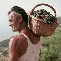 Zlatan Otok gallery photo
