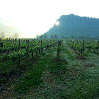 GranMonte Vineyard and Winery profile photo