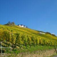 Weingut Lay profile photo