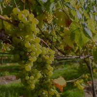 Velfrey Vineyard profile photo