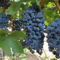 Arcadia Vineyards profile photo