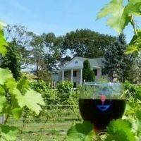 Southwind Vineyard & Winery  gallery photo