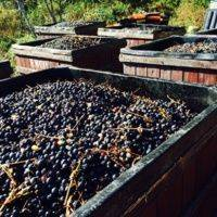 Deep Root Vineyard profile photo