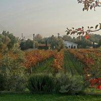 Urlice Vineyards and Vinery gallery photo