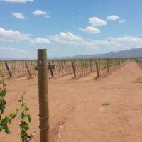 High Lonesome Vineyard gallery photo