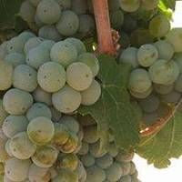 High Lonesome Vineyard profile photo